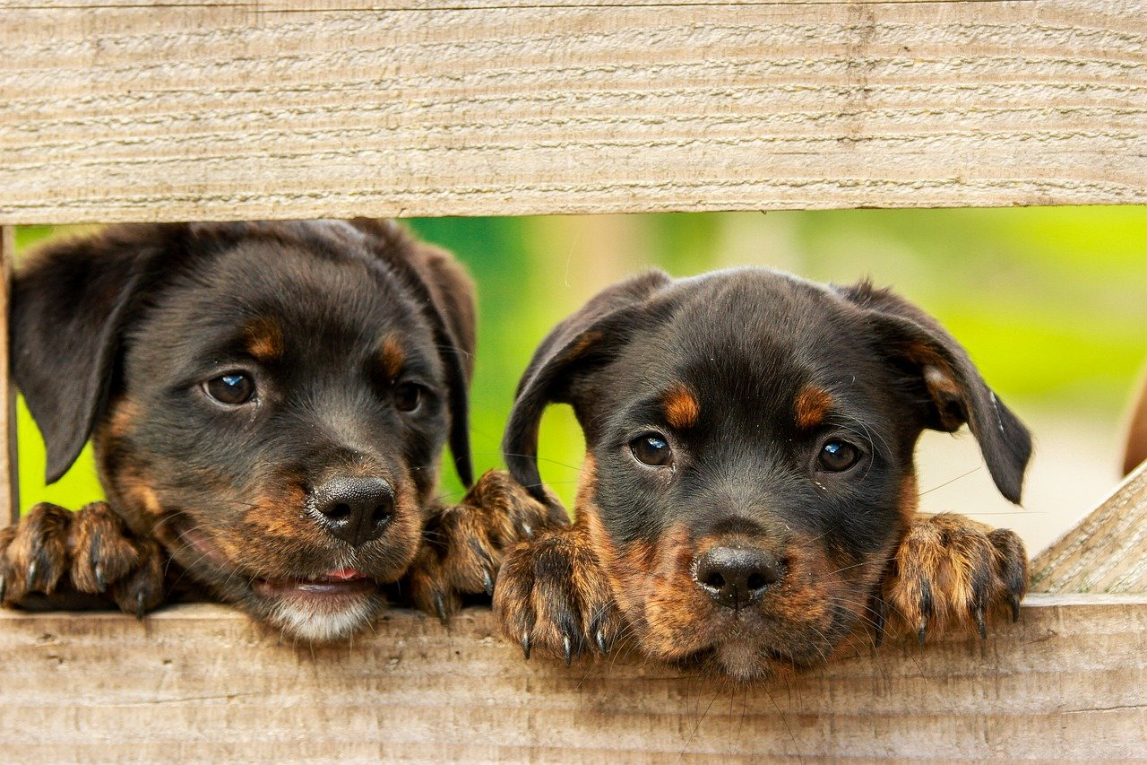 6 Reasons to Allow or Not Allow Pets